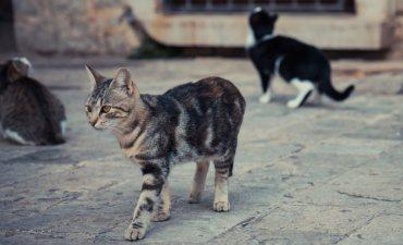 Cats not herding in old European street © splendens - Fotolia.com