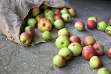 Image of apples in a bag