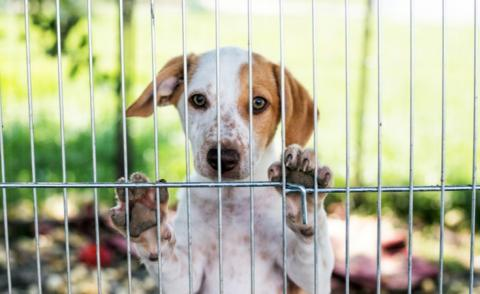 Homeless puppy behind dog shelter cage © marcinm111 - shutterstock