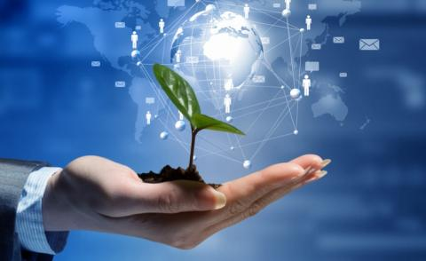 Business growth technology global seedling in hand © Sergey Nivens - shutterstock