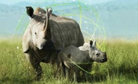ConnectedConservation