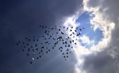 Birds on sky, develop growing business concept  © Love the wind - shutterstock