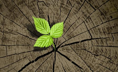 New green leaf grows from old tree trunk © captureandcompose - shutterstock