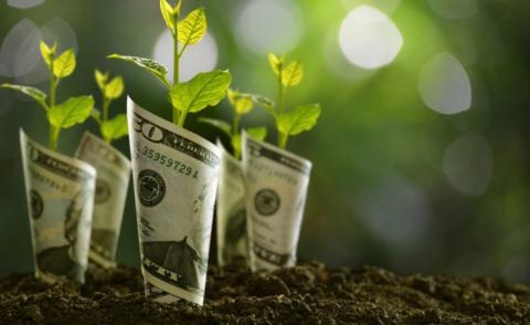 Bank notes rolled around seedlings symbolize financial planning, business growth © amenic181 - shutterstock